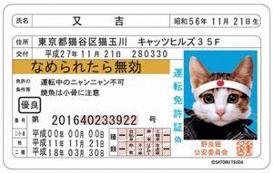 0猫免許証表の画像